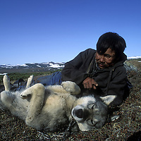 Russia, Koryuk native reindeer Valodia Ivteket with dog in hills on Taygonos Peninsula in Russian Far East