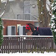 Lingfield 22nd January 2013