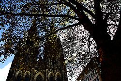 A view of the Cologne Cathedral through fall leaves.