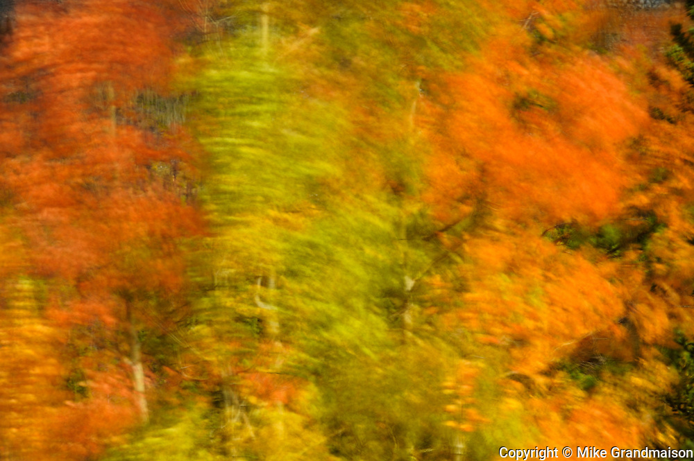 Poplars in autumn colors blurred due to high winds during a long exposure<br /> Banff National Park<br /> Alberta<br /> Canada