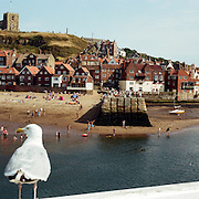 Seagulls survey Whitby Harbour, showing Whitby Abbey on the hillside overlooking the town. Whitby is a seaside town situated on the East coast of Yorkshire at the mouth of the River Esk, Whitby, North Yorkshire, England. 23rd July 2011. Photo Tim Clayton