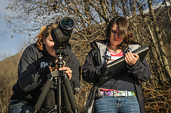 Students Maggie Martin (left) and Allison Stuart count bald eagles (Haliaeetus leucocephalus) along the Chilkat River in the Alaska Chilkat Bald Eagle Preserve, near Haines, Alaska. Since 2009, students have been conducting a weekly count of bald eagles during the fall semester for the citizen science class at the Haines School. The project is part of a field-based for-credit class, sponsored by the Takshanuk Watershed Council, in which students participate in research studies and learn about field data collection. Under the guidance of Pam Randles, Takshanuk Watershed Council Education Director, students count bald eagles in the Chilkat River Valley using spotting scopes at 10 locations and present their data at the Bald Eagle Festival held in November in Haines. During late fall, bald eagles congregate along the Chilkat River to feed on salmon. This gathering of bald eagles in the Alaska Chilkat Bald Eagle Preserve is believed to be one of the largest gatherings of bald eagles in the world.