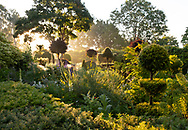Sunrise through topiary and herbaceous planting in The Laskett Gardens, Much Birch, Herefordshire, UK