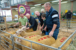 © Licensed to London News Pictures. 16/09/2018. Llanelwedd, Powys, Wales, UK. Charolais rams are inspected. Inspection and show events take place on the day before the NSA (National Sheep Association) Wales & Border Ram Sale - reportedly the biggest in Europe - at the Royal Welsh Showground in Powys, Wales, UK. There are two NSA Wales & Border Ram Sales held each year: An early one in August and the main one in September. More than 5,000 rams from about 30 breeds will be on sale. Photo credit: Graham M. Lawrence/LNP