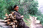 Lady from Kardang village ,Lahaul valley,Himalayas,Himachal Pradesh,India carrying a heavy load of firewood up a steep mountain path.