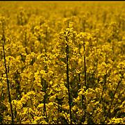 NATURA<br /> Photography by Aaron Sosa<br /> Poznan, Jastrowie - Polonia 2008<br /> (Copyright © Aaron Sosa)