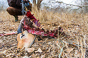 Anti-snare security patrol, Hlane Royal National Park, Swaziland