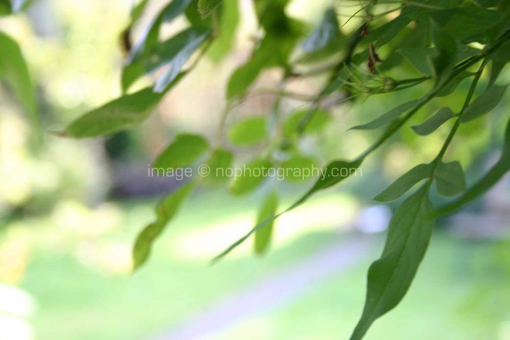 atmospheric sunlight shining through leafs in garden