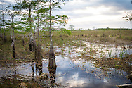 The Florida Everglades are among the world's most unique wilderness areas.