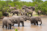 South Africa-safari
