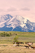 Horse herd, grazing, Crazy Mountains, North of Big Timber, Montana, solar water well