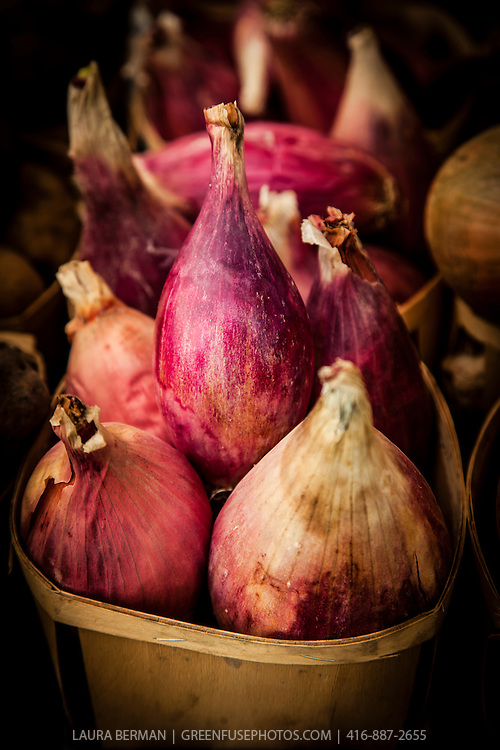 Red Torpedo Tropea onion, an heirloom onion from Tropea in Calabria, Italy