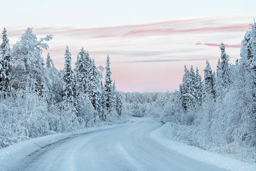 Hoarfrost covers trees along road in Fort Richardson in Southcentral Alaska. Winter. Morning.