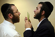 Two Orthodox Jewish men select their Lulav for the festival of Sukkot, the feast of Tabernacles. The Lulav is a Palm frond used in the mitzvah of the four species. To qualify for use the Lulav must be perfectly straight with whole leave that lay closely together and not be broken at the top. The holiday of Sukkot commemorates the forty-year period during which the children of Israel were wandering in the desert.