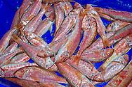 Alberto Carrera, Fish baskets in Fish Market, Fishing port, Mediterranean Sea, Aguilas, Murcia, Región de Murcia, Spain, Europe