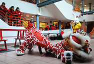 February 13, 2011 - Members of the Gund Kwok Asian Women Lion & Dragon Dance Troupe practice the Lion Dance in their Den before performing in Boston's Chinese New Year celebration in the city's China Town. .