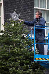 © licensed to London News Pictures. London, UK 30/11/2012. A Downing Street staff positioning the star on top of the Downing Street Christmas Tree outside No 10 on 30/11/12. The tree is a Nordmann Fir grown in Scotland by Mike Craig. Photo credit: Tolga Akmen/LNP