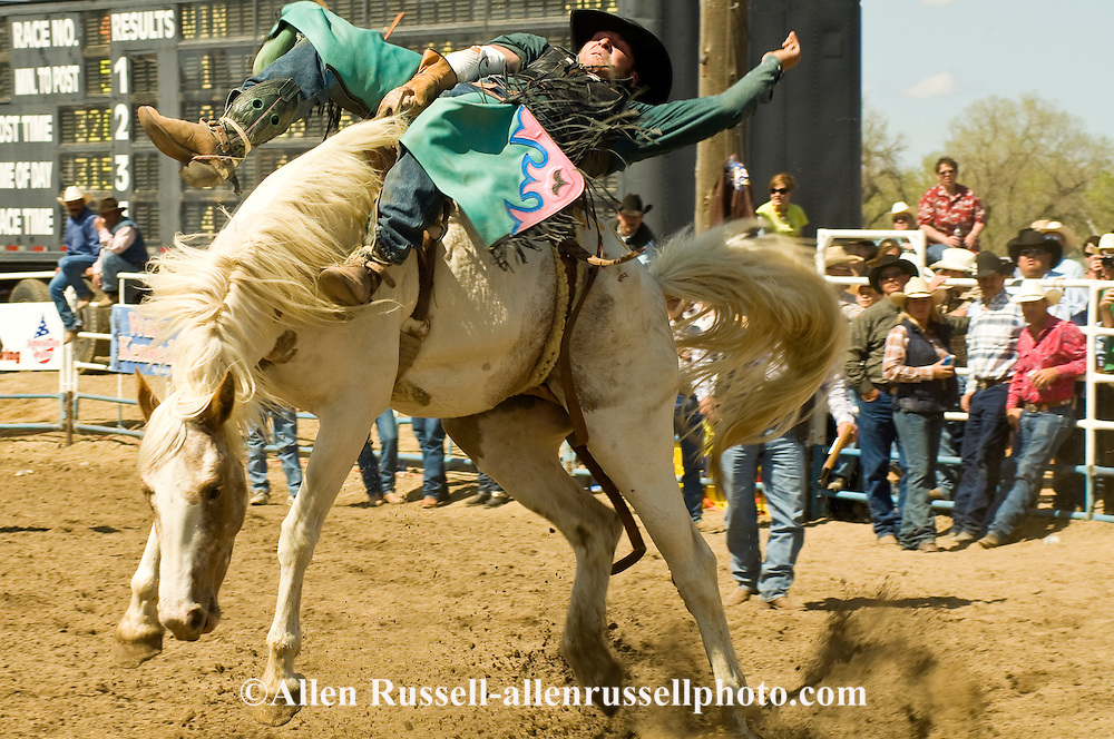 Rodeo, Bareback Bronc rider, Miles City Bucking Horse Sale, Montana, <br /> MODEL RELEASED on rider only