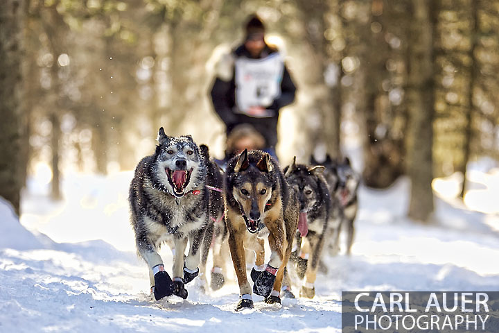 March 7th, 2009:  Anchorage, Alaska - The team of two time defending champion and two time ESPY nominee, Lance Mackey of Fairbanks, Alaska heads through the woods of Behm Lake during the 2009 Ceremonial Start of the Iditarod.