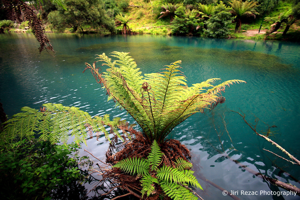 AUSTRALIA NEW SOUTH WALES 13FEB08 - Ferns grow in the Blue Lake near the Jenolan Caves in the Blue Mountains, New South Wales, Australia...jre/Photo by Jiri Rezac..© Jiri Rezac 2008..Contact: +44 (0) 7050 110 417.Mobile:  +44 (0) 7801 337 683.Office:  +44 (0) 20 8968 9635..Email:   jiri@jirirezac.com.Web:    www.jirirezac.com..© All images Jiri Rezac 2007 - All rights reserved.
