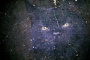 Black cat staring through screen