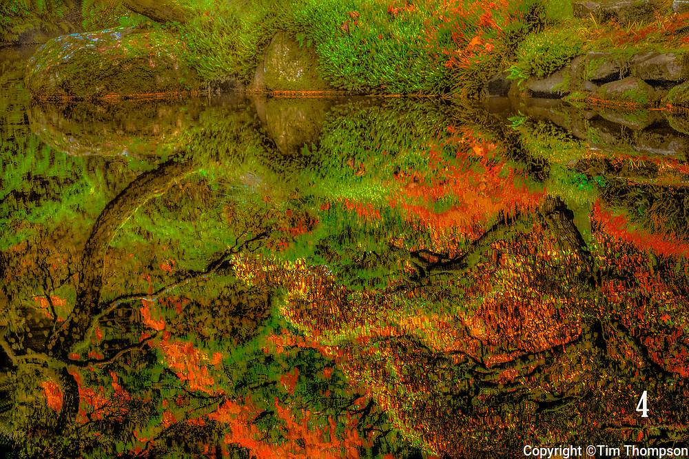 reflection of fall foilage in pond, Blodel Reserve