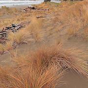 Cape Sebastian South Shoreline Surf Grass - Oregon Coast