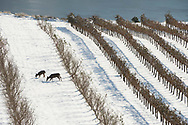 Winter at Maryhill Winery, Columba River Gorge, Washington