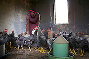 Ijeoma Ewurum used to keep chickens as a hobby but when she retired from her teaching career she set it up as a larger business. <br />