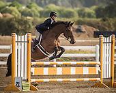 Horse No 45