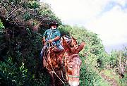 Molokai Mule Ride, Kalaupapa, Molokai, Hawaii