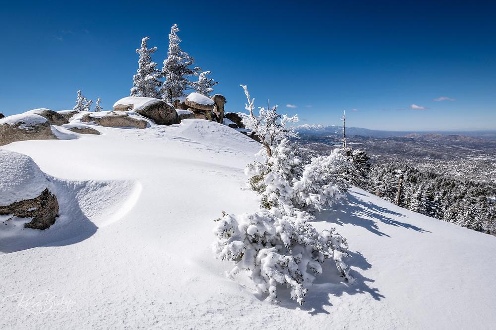 Rime ice on pines above Lake Arrowhead in the San Bernardino Mountains, San Bernardino National Forest, California USA