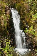 El Parque Nacional Natural Chingaza se encuentra ubicado en la cordillera Oriental en la región andina en Colombia. Su superficie hace parte de los departamentos de Cundinamarca y Meta. <br /> <br /> Fue creado en mayo de 1977 y aprobado por la resolución No. 154 del 6 de junio del mismo año. Se extiende en las jurisdicciones de los municipios de La Calera, Fómeque, Guasca y San Juanito.<br /> <br /> El parque tiene una extensión de 76.600 hectáreas y alturas entre 800 y 4.020 msnm. Posee climas cálido, templado, frío y de páramo. Sin embargo, en todas las zonas ecoturísticas el clima es páramo o muy frío y lluvioso, comprendiendo ecosistemas tan variados como humedales, selvas y bosque húmedos. <br /> <br /> La temperatura oscila entre los 4 y 21,5 °C. Allí nacen los ríos Guatiquía y Frío, y las abundantes lluvias crean lagunas como las de Siecha y Chingaza. Esta es la más grande de las lagunas naturales que existen en el parque, cuyo número sobrepasa las 100.<br /> <br /> Posee más de 383 especies de plantas y se estima que la flora total del área puede sobrepasar las 2.000 especies. Los frailejones, las árnicas y los musgos de pantano son maravillas para la conservación de la humedad ambiental.<br /> <br /> ©Alejandro Balaguer/Fundación Albatros Media.