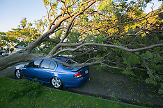 Napier-Cyclone Cook uproots trees across city