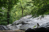 A moment of Zen at Umpire Rock, an outcrop of Manhattan schist  protruding from the Central Park bedrock in Manhattan near the southwest corner of the park, south of the Heckscher Ballfields.