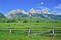 A lush open meadow below the Teton Range.  Grand Teton National Park, Wyoming, USA