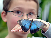 2013_03_25_Butterfly_SSI