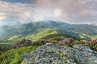 The Roan Highlands are a series of grassy balds (highland meadows) along the state borders of Western North Carolina and Eastern Tennessee.  Accessed via the Appalachian National Scenic Trail, visitors are likely to see a number of colorful blooming plants during the month of June, chief among them the Catawba Rhododendron with its purple and magenta blossoms dotting the mountain hillsides.  Despite it's southern geography, the high relative altitude of the Roan Highlands provides for quick weather shifts and dynamic changes.  On this morning, thick fog was clearing out of the valley in conjunction with the first light of day.