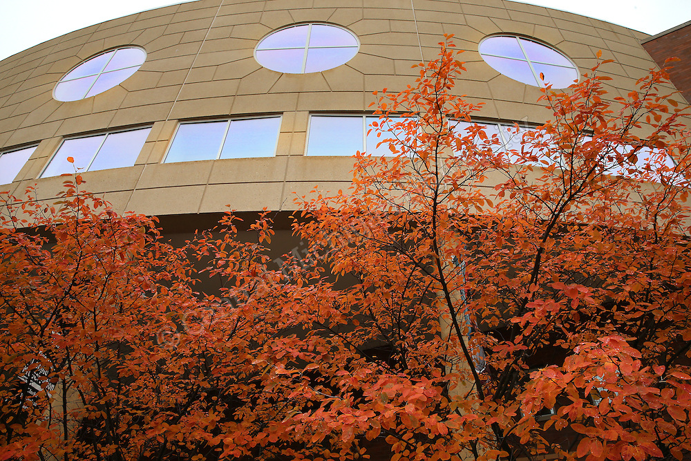 Fall color on the campus of Central Michigan University on Monday October 13, 2014. Photos by Steve Jessmore/Central Michigan University