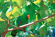 Parrot<br />