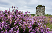 Prominent on Culloden Battlefield today is the 20-foot-tall memorial cairn, erected by Duncan Forbes in 1881 along with separate headstones to mark mass graves of the clans. Purple heather flowers bloom in profusion in August. The Culloden Battlefield visitor center is run by the National Trust for Scotland, near Inverness, United Kingdom, Europe. The Battle of Culloden on 16 April 1746 was part of a religious civil war in Britain and was the final confrontation of the Jacobite rising of 1745. It was the last pitched battle on British soil, and in less than an hour about 1500 men were slain – more than 1000 of them Jacobites. After an unsuccessful Highland charge against the government lines, the Jacobites were routed and driven from the field. Today, strong feelings are still aroused by the battle and the brutal aftermath of weakening Gaelic culture and undermining the Scottish clan system. Three miles south of Culloden village is Drumossie Moor, often called Culloden Moor, site of the battle. Culloden is in Scotland 5 miles east of Inverness, off the A9/B9006, directed by brown signs.