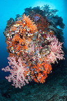 A Soft Coral Encrusted Reef Corner<br /> <br /> Shot in Indonesia