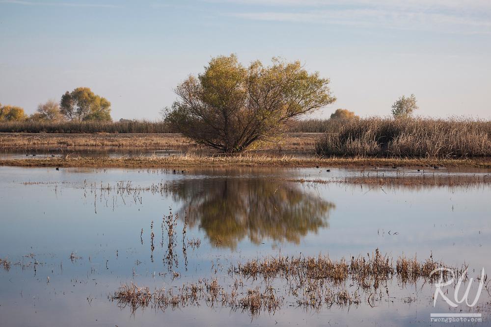 Merced National Wildlife Refuge, California
