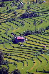27.07.2014, Bali, IDN, Natur und Sehenswuerdigkeiten in Indonesien, im Bild riesige Reisfelder und Reisterassen in Zentralbali, Munduk, Bali, Indonesien. EXPA Pictures © 2014, PhotoCredit: EXPA/ Eibner-Pressefoto/ Schulz<br /> <br /> *****ATTENTION - OUT of GER*****