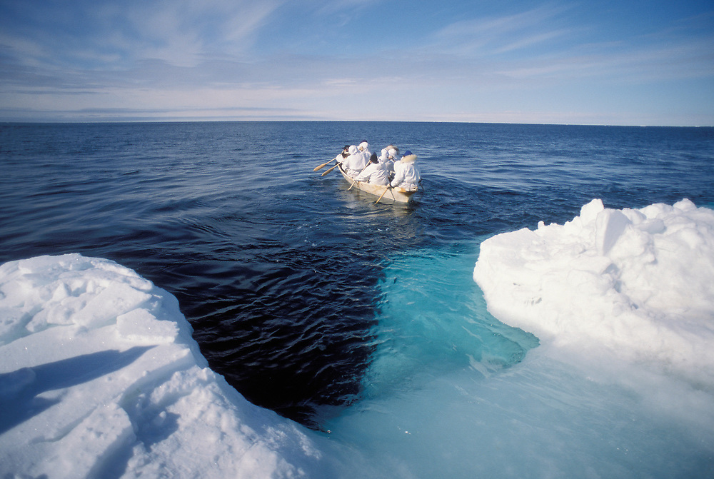 Alaska.  Barrow. Launching the Umiak - Little Kuupak crew. Seal skin whaling boat.