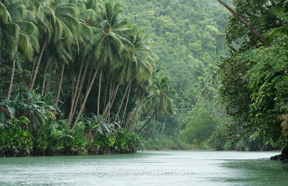Loboc River, lined with palm trees and lush rainforest, Bohol, Philippines..