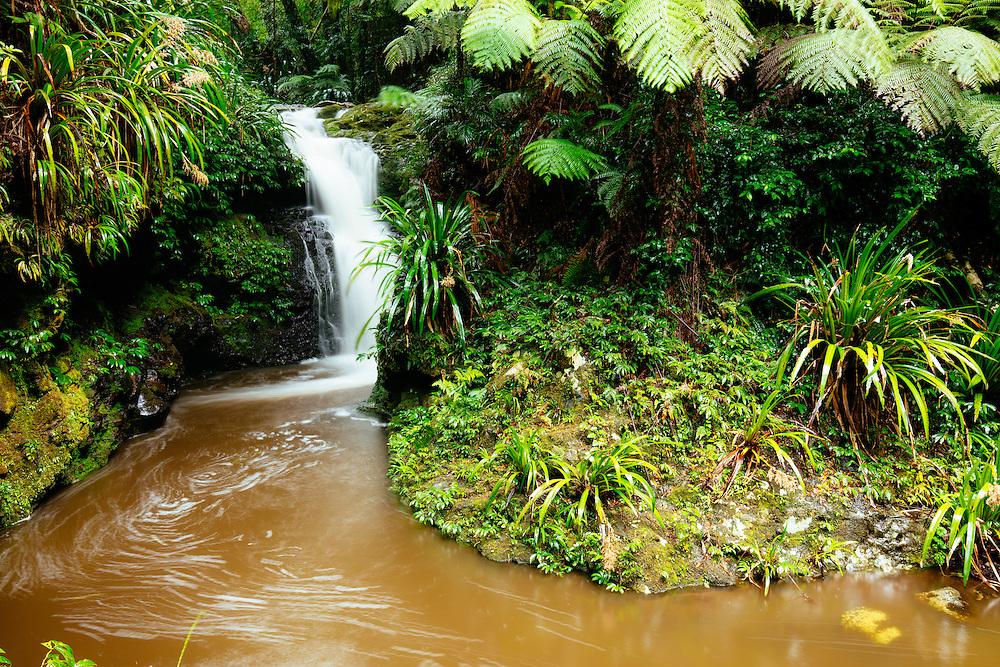 Echo Falls cascading down into a pool surrpunded by lush subtropical rainforest. Lamington National Park.