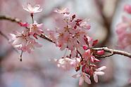 2012 Spring Color