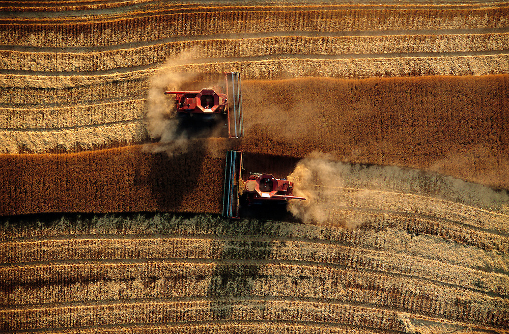 Combines cutting wheat during harvest near Goodland, Kansas. Seen from the air.