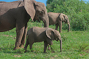 Elephant family, Lake Manyara National Park, Tanzania
